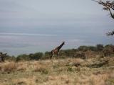 Танзания 2011. Серенгети