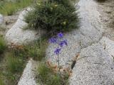 flora_fauna_02