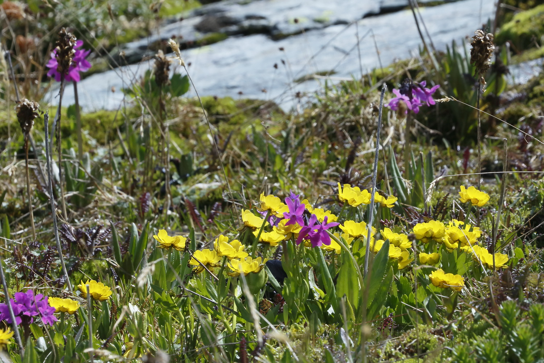 Фото диких цветов алтая
