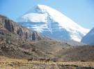 Атлас Живой Природы региона горы Кайлас