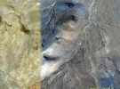 Образы Великих Сущностей в ландшафтных геоглифах региона Кайласа