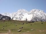 Индия 2008. Ладакх