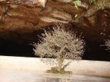 Китай 2008.  Пещеры Хуаншань